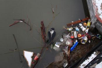 muerte de aves