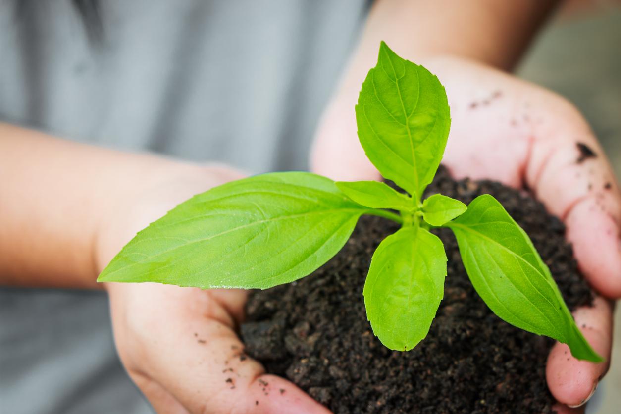 Frases Sobre El Medio Ambiente Que Te Harán Reflexionar