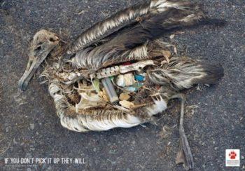 imágenes del medioambiente