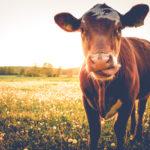 6 ventajas de comer carne ecológica