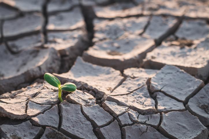 consecuencias del efecto invernadero