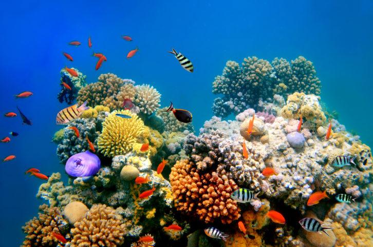 Protector solar ecologico corales